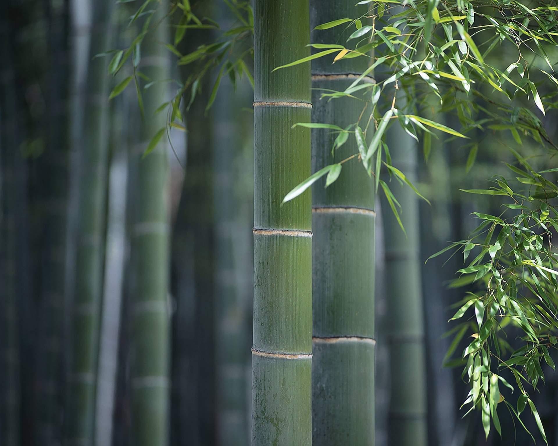 bamboumoso